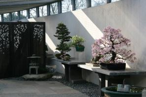 4-outdoorgallery_crespibonsaimuseumm